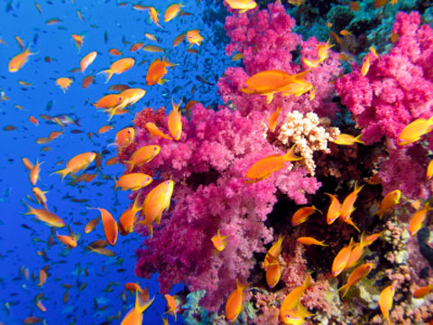 ocean acidification essays
