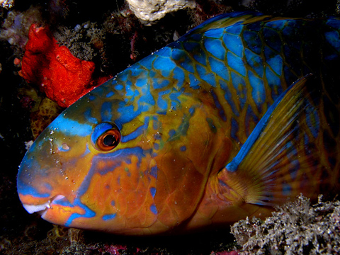 essays about coral reefs