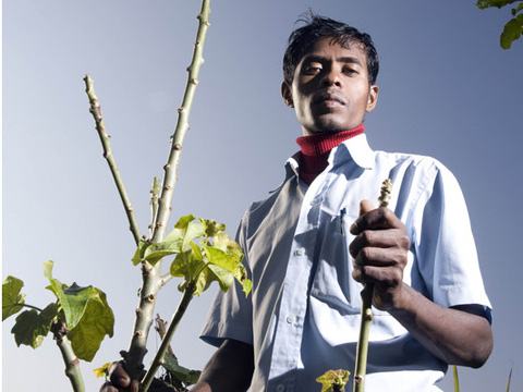 Raju Sona is a smallscale farmer, seen with his only Jatrophal tree at his home farm