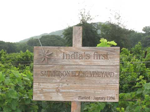 India's first Sauvignon blanc