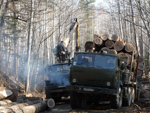 Illegal logging in Russia