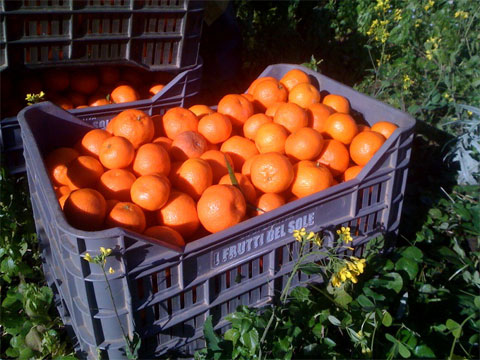 oranges migrant workers coca cola