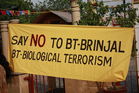 No to Bt-Brinjal, reads a banner at a protest in New Delhi. Photo: Joe Athialy via Flickr.com.