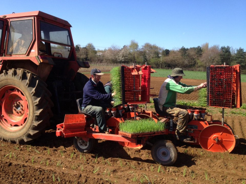 Planting out onion seedlings at Sandy Lane Farm, and organic farm in Oxfordshire, UK. Photo: Sandy lane Farm.
