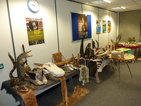 These contraband wildlife trade items were seized by the UK's Border Force. Photo: UK Home Office via Flickr.com.