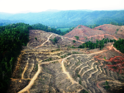 Rainforest in Sumatra - cleared for an APRIL palm oil plantation. Photo: Bill Lawrance.