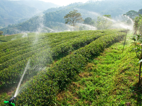 Tea-growing can require large volumes of scarce water - one of many challenges facing growers. Photo: Forum for the Future.