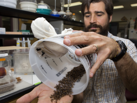 Daniel Hahn with his sexually invigorated but sterile male flies.