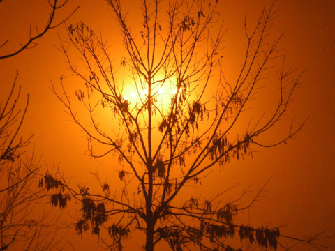 Tree losing its leaves in the Beijing smog. Photo:  Philip McMaster via Flickr.com.