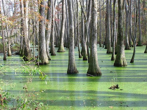 Swamp about 30 miles north of Jackson, Mississippi, USA. Photo: Todd Hall via Flickr.com.