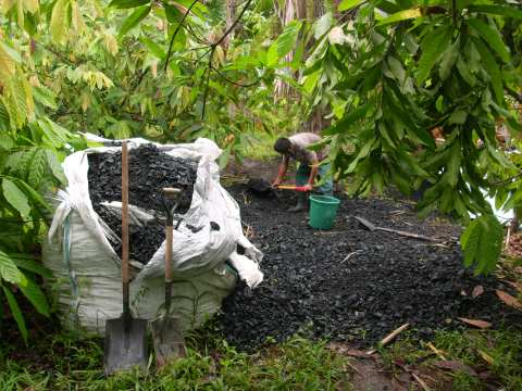 Locally produced biochar. Photo: Carbon Gold.