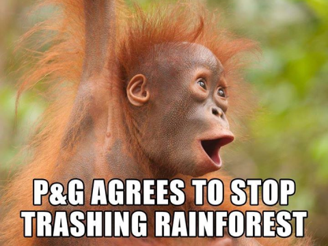 P&G commits to deforestation-free palm oil.