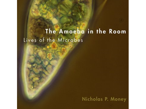 The Amoeba in the Room front cover - Nicholas Money / OUP.