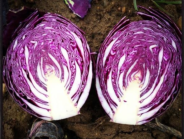 It's not just whether it's organic - it's also what it is. Organic red cabbage from Sandy Lane Farm, Oxfordshire, England.