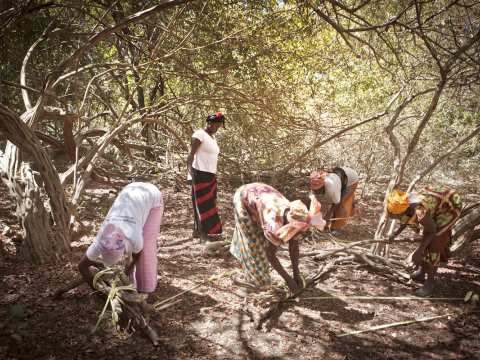 Koudioube village women working in the forest. Photo: Jason Florio / Concern Universal.