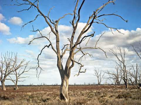 The drought-stricken Chowilla floodplain in South Australia, Changing wind patterns are bringing cold and snow to Antarctica, while Australia gets hotter and drier. Photo: Gary Sauer-Thompson via Flickr.