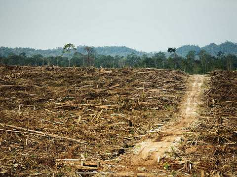 A Cargill-owned oil palm plantation in West Kalimantan, Indonesia. Photo: Rainforest Action Network via Flickr.