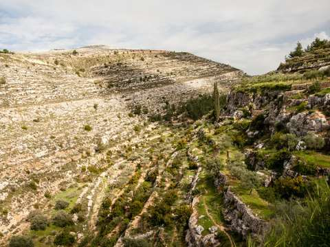 A terraced valley at Battir. Photo: Andrea Moroni via Flickr.