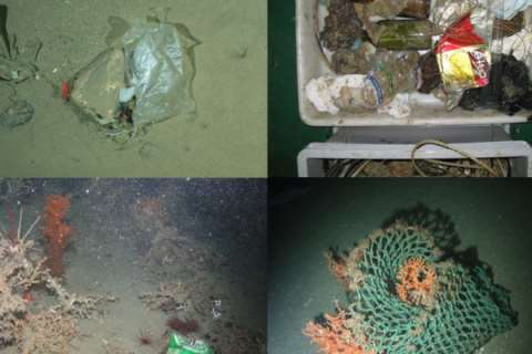 Surveys off the coast of Europe revealed all kinds of human trash, including plastic bags (upper left and lower right), beer cans (lower left) and glass bottles (upper right). Photo: Pham et al.