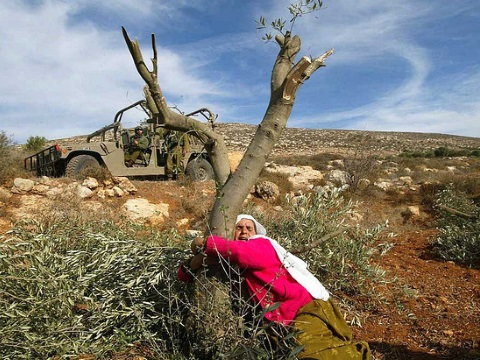 A Palestinian woman hugs an olive tree to protect it from destruction by the Israeli army. Photo: via Frank M. Rafik / Flickr.