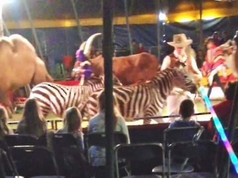 Wild animals photographed at Jolly's Exotics circus. Photo: Animal Defenders International.