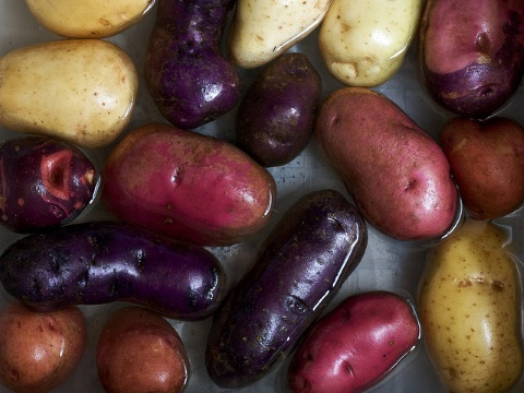 Colorful Heirloom Potatoes - 'Carola', 'All Red', 'All Blue', and 'Purple Viking' - collection  from Seed Savers. Photo: Susy Morris via Flickr.