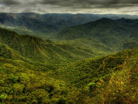 'Mata Atlântica' in Brazil's Serra da Gandarela national park. But there are few large forest areas like this one remaining. Mostly the Atlantic forest habitat is fragmented by farms, roads and towns. Photo: Frederico Pereira via Flickr.