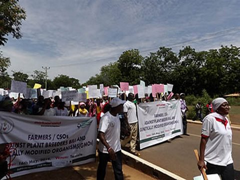 Farmers in Ghana marching against the Plant Breeders Bill, now before the country's parliament, September 2014. Photo: Food Sovereignty Ghana.