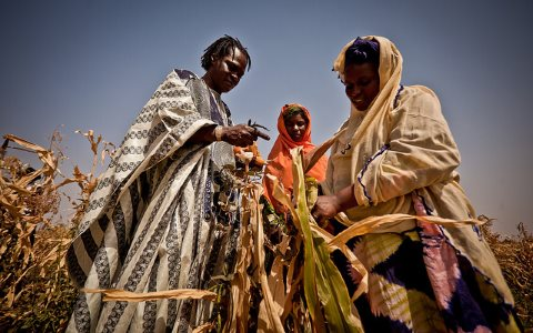 Baaba Maal inspects failed corn crops in Mauritania. Photo: Oxfam International via Flickr.