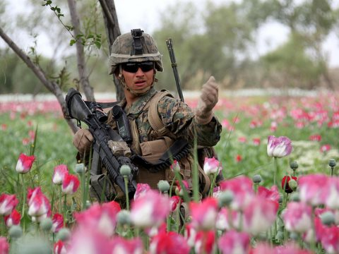 Waist-high in opium poppies, US Marines patrol west of Nahr-e Saraj canal. Photo:  DVIDSHUB via Flickr.
