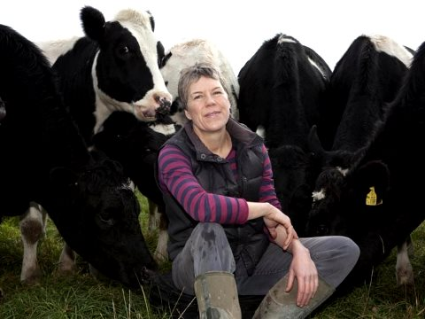 Helen Browning, chief executive of the Soil Association, among her organic cattle. Photo: Soil Association.
