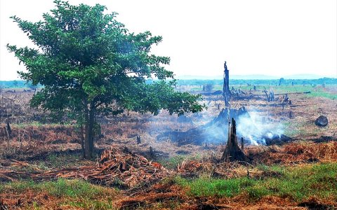 A peatland fire smoulders in the peat of a former swamp forest cleared for commercial agriculture in Indonesia. Photo: Ryan Woo / Center for International Forestry Research (CIFOR), (CC BY-NC-ND 2.0).