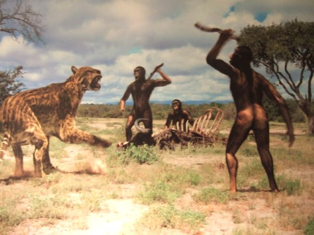 Mind who you call stupid ... Palaeolithic men and tiger, Africa, 100,000 - 2,000,000 years ago. Image: via cantabriatotal.com.