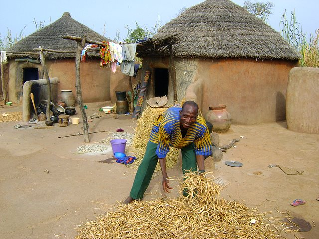 Ghanaian farmer Alanig Bawa drying cowpeas in his yard. Photo: Tree Aid via Flickr (CC BY 2.0).