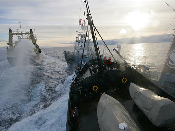 Sea Shepherd's Steve Irwin collides with the Japanese whaling vessel Yushin Maru No. 3 in the Ross Sea, Antarctica, 6th February 2009. Photo: John via Flickr (CC BY-SA).