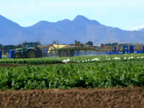 Workers caught in pesticide drift as they work in the fields. Photo: Ecologist Film Unit / Channel 4 News.