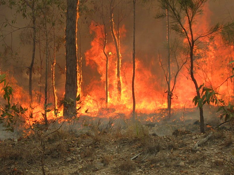 An accidental bush fire at Captain Creek in Central Queensland that started on a nearby farm. But most of the bush clearance is deliberate - and it's taking place on a huge scale. Photo: 80 trading 24 via Wikimedia Commons (CC BY-SA).