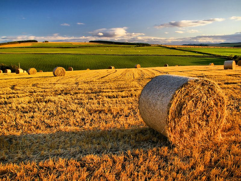 No GMOs here. The harvest is in on this farm in Aberdeenshire, Scotland. Photo: Gordon Robertson via Flickr (CC BY).