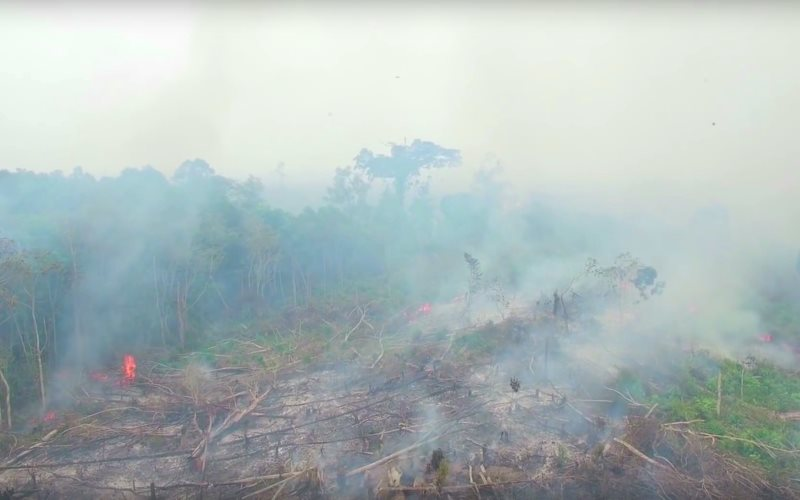 Flames break through from deep peatland in burning Indonesian rainfoirest. Photo: Greenpeace via Youtube video (see embed).