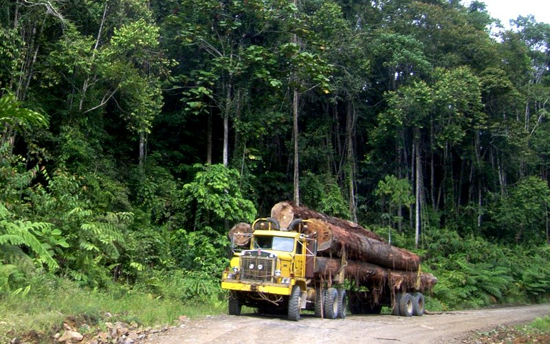 A truck transport huge logs in Indonesia. Photo: Hari Priyadi for Center for International Forestry Research (CIFOR) via Flickr (CC BY-NC-ND).