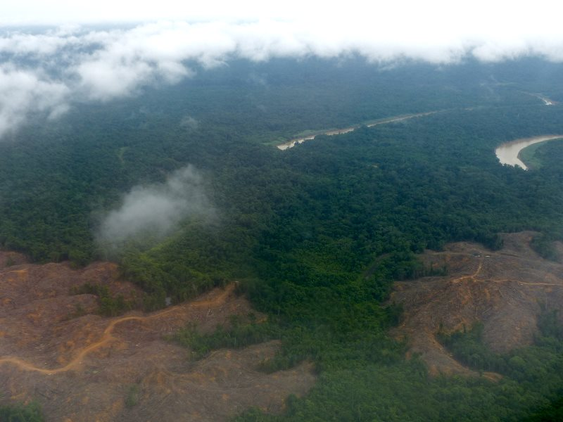 Vanishing rainforest: soon more oil palm plantations. Seen on flight between Miri and Mulu, Sarawak, Malaysia. Photo: Bernard DUPONT via Flickr (CC BY-SA).