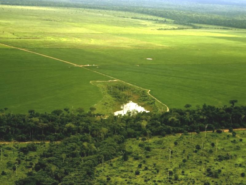 Enormous farms are eating deep into the forests of the Mato Grosso in Brazil - and the EU is one of the main markets for the soya they produce. Photo: Leonardo F. Freitas via Flickr (CC BY-NC-SA).
