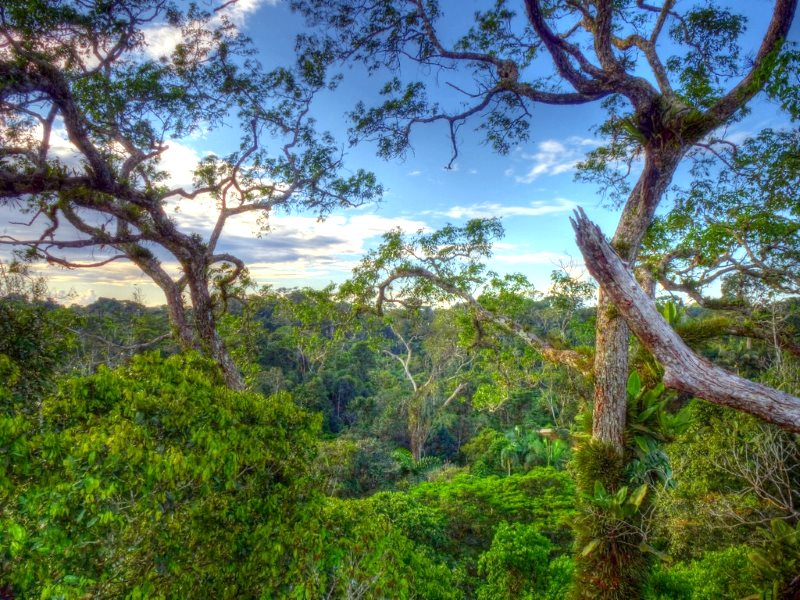 Measure the value of a rainforest in tonnes of carbon, and 'market forces' will probably end up destroying. Canopy in Yasuni National Park, Ecuador. Photo: Andreas Kay via Flickr (CC BY-NC-SA).