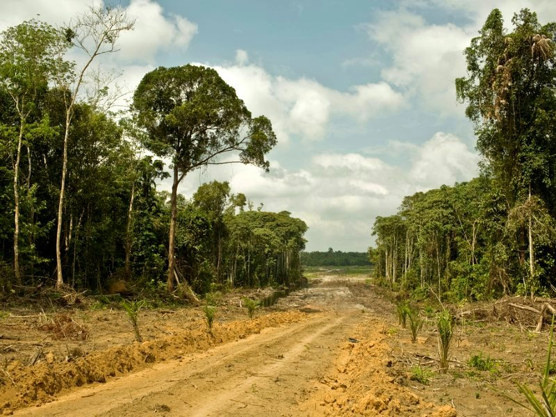 One of two undisclosed palm oil plantations in West Kalimantan, Indonesia, operated by Cargill, via PT Indo Sawit Kekal, 2010. Photo: David Gilbert / Rainforest Action Network via Flickr (CC BY-NC).