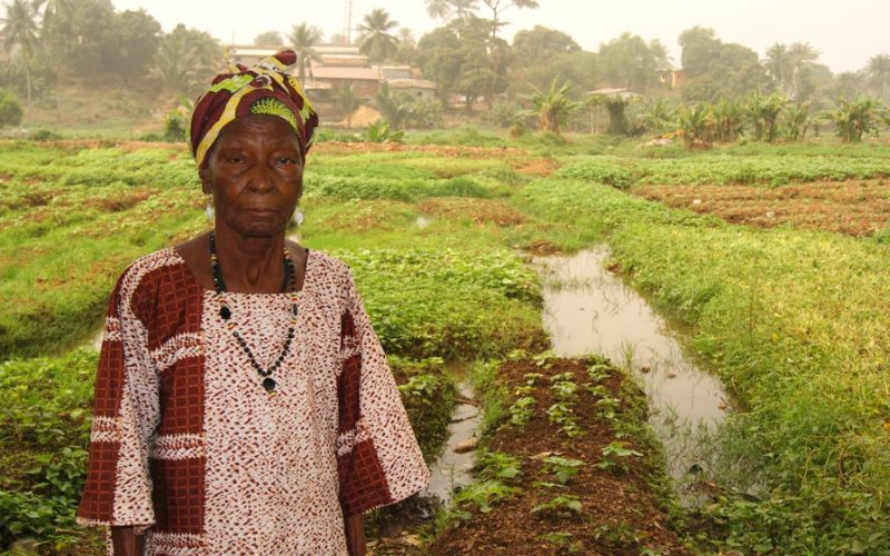Farmers like Madame Fatu Kanu, near Freetown in Sierra Leone, have nothing to gain from the kind of corporate agricultural development offered by the 'New Alliance', and everything to lose. Photo: kenny lynch via Flickr (CC BY-NC-ND).