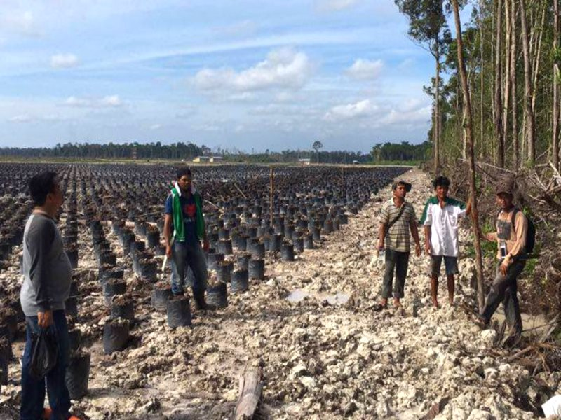 Site of a proposed palm oil plantation in Kalimantan, Indonesia. Photo: Dr Ward Berenschot, Author provided.