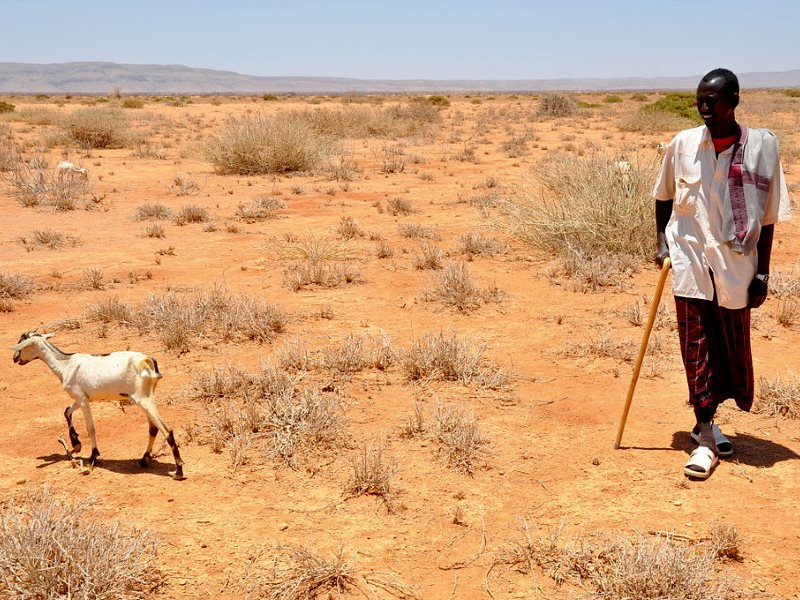 Somalian farmer Aden Jama takes one of his few remaining goats out to look for pasture.