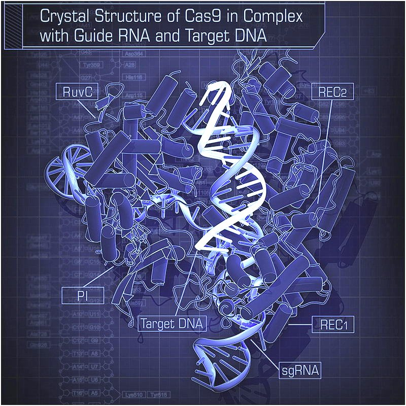 Does this look like genetic engineering to you? Crystal Structure of Cas9 in Complex with Guide RNA and Target DNA. By Hiroshi Nishimasu, F. Ann Ran, Patrick D. Hsu, Silvana Konermann, Soraya I. Shehata, Naoshi Dohmae, Ryuichiro Ishitani, Feng Zhang, and