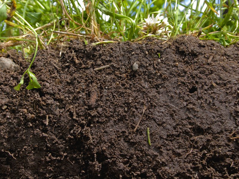 The rich, deep color of this soil and high organic content shows exactly what healthy soil looks like. A diverse blend of crops, grasses, and cover crops creates a protective blanket that feeds and nurtures the soil. Photo: USDA-NRCS photo by Catherine Ul