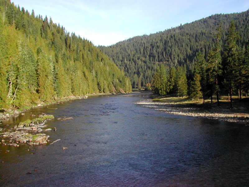 These trees along Idaho's Selway River may be harboring insects, fungi and bacteria - best cut them down quick to maintain forest health! Photo: Friends of Clearwater.